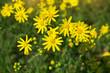 sunlit flowers in a meadow