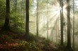 Foggy, sunny morning in spring forest
