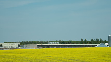 Canola field and farm silo, agriculture production