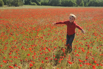 Poppy Field In Spring