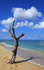 armond beach barbados