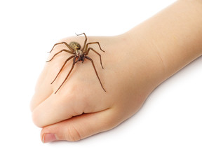 Spider on the children fist