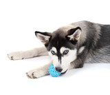 Beautiful cute husky puppy, isolated on white - 64964411