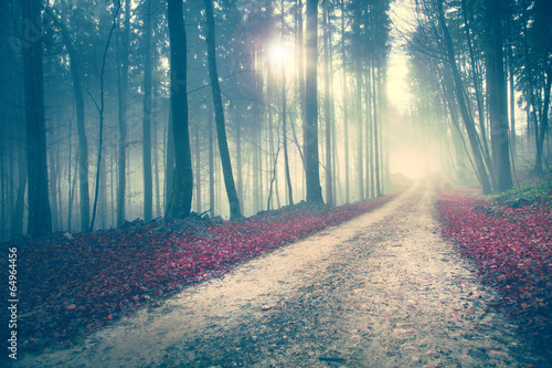 Mysterious forest road © robsonphoto