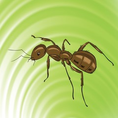 brown ant
