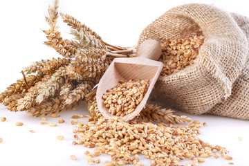 Ripe wheat and in a linen bag with a wooden spatula
