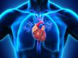 Leinwanddruck Bild - Human Heart Anatomy