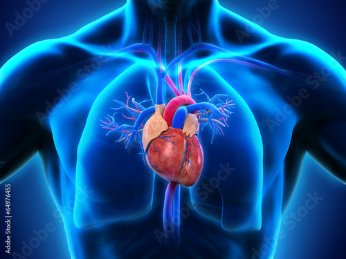 Leinwanddruck Bild Human Heart Anatomy