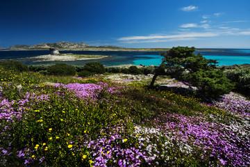 paradisiaca spiaggia  La Pelosa Sardegna