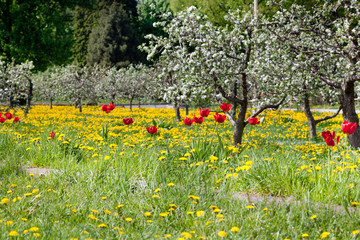 Green fields and flowering trees, spring, flowers, beauty