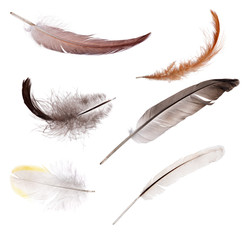 set of six isolated color feathers
