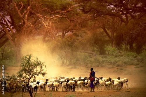 Papiers peints Autre Afrique shepherd leading a flock of goats