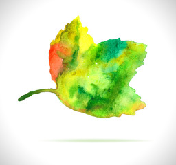 Watercolor color leaf design element