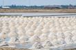 The harvest times of salt in salt evaporation pond in Thailand