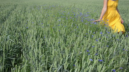 Female farmer in yellow dress walk wheat and cornflower plants