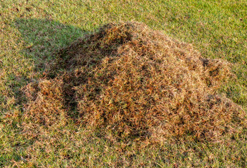 Pile of dry grass