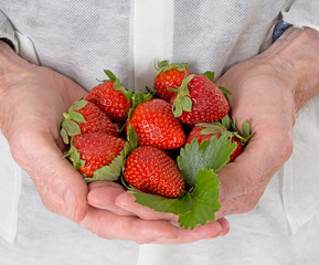 Strawberry farmer, processor. Handful of ripe red fruit.