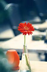 Red flower in vase on summer restaurant table