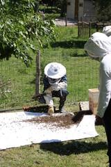 Apicultur et abeilles