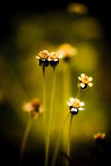 vintage Grass flower