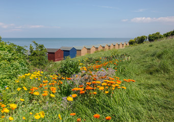 Wild flowers and beach huts in Whitstable