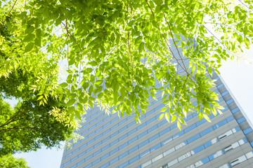 新宿高層ビル街の新緑