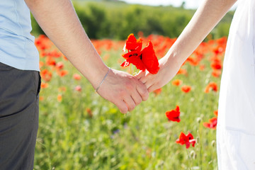 Couple holding hands in the fields of poppies