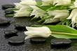 Biały tulipan z kamieniami do spa