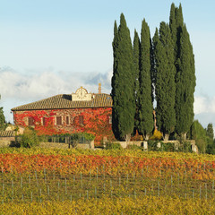 fantastic tuscan landscape with vineyards and