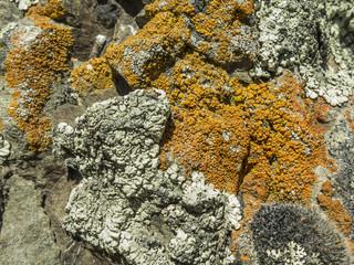 Detalle de piedra con líquen amarillo. Alta montaña. Textura.