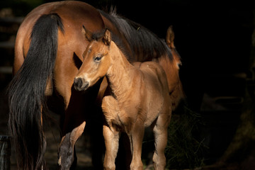 Colt next to mother.