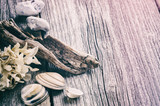 Marine background with seashells