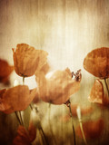 Grunge style photo of poppy flower field