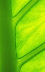 Leaf background texture
