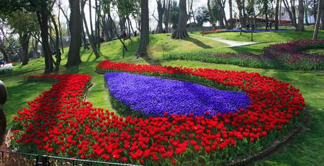 Tulip Garden in Emirgan Wood,Istanbul