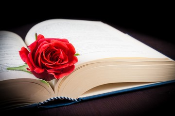 detail of red rose on the open book