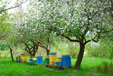 colorful beehives in spring orchard - 65010050