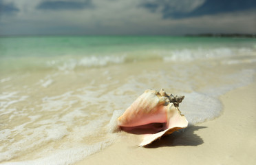 Pink conch seashell on tropical beach