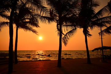 Palm Tree at Sunset Beach