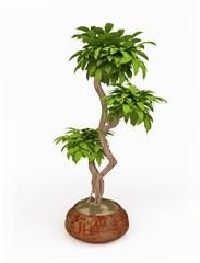 Houseplant in a Ceramic Pot