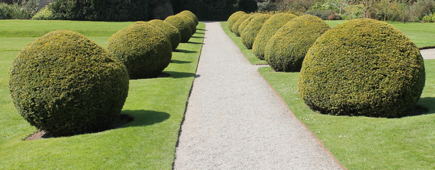 A Double Row of Ornamental Round Garden Hedges.