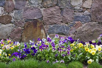 Granite wall and pansies