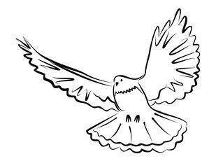 simple black outline of a dove
