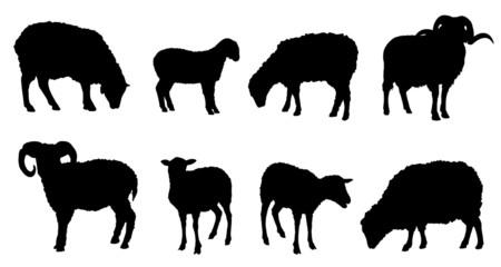 sheep silhouettes