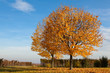 canvas print picture - Herbst