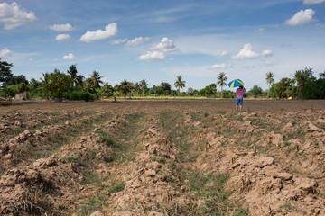 prepare plantation with blue sky