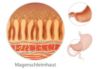 Magen - Schleimhaut mit Lupe