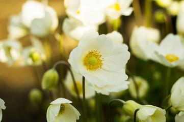 An anemone forest closeup