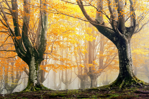 magic forest in autumn