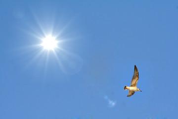 Flug in die Freihet